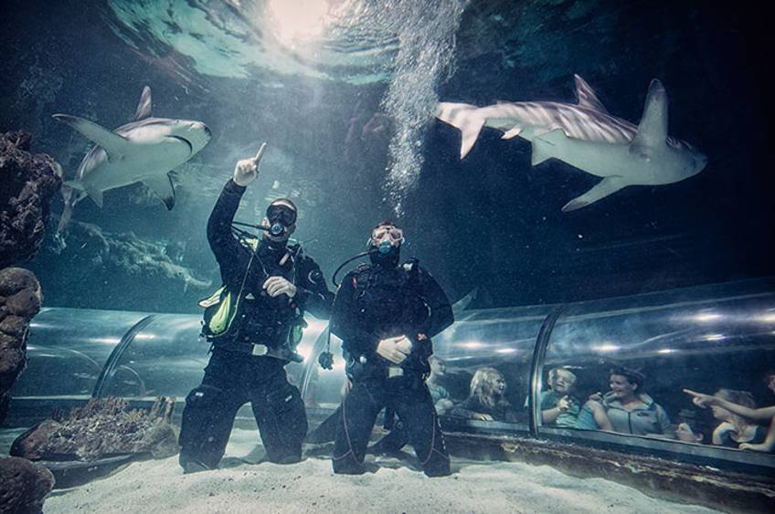 Big Shark Dive i Kattegatcentret